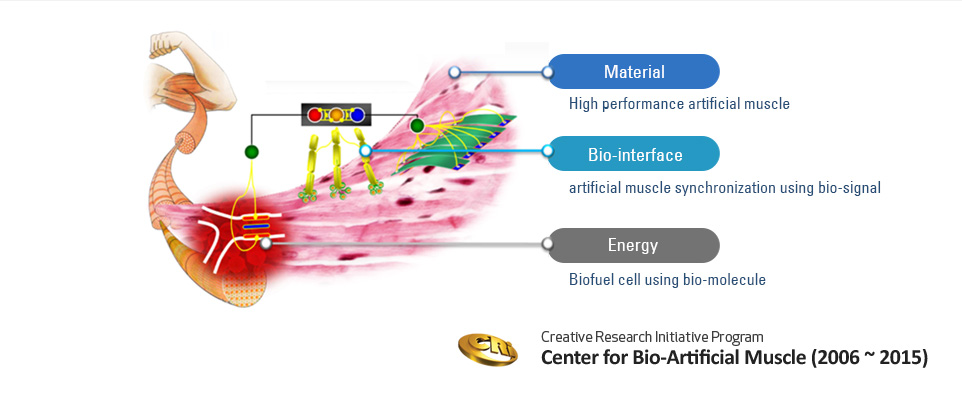 Bio-Artifical Muscle system